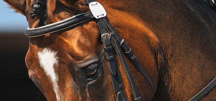 florida-dressage-schooling-show-jacksonville-equestrian-center-857x400