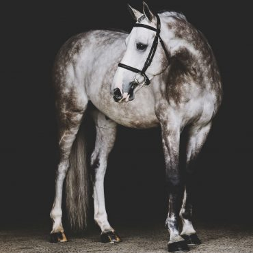 Art: Holly Casner Equestrian Photographer